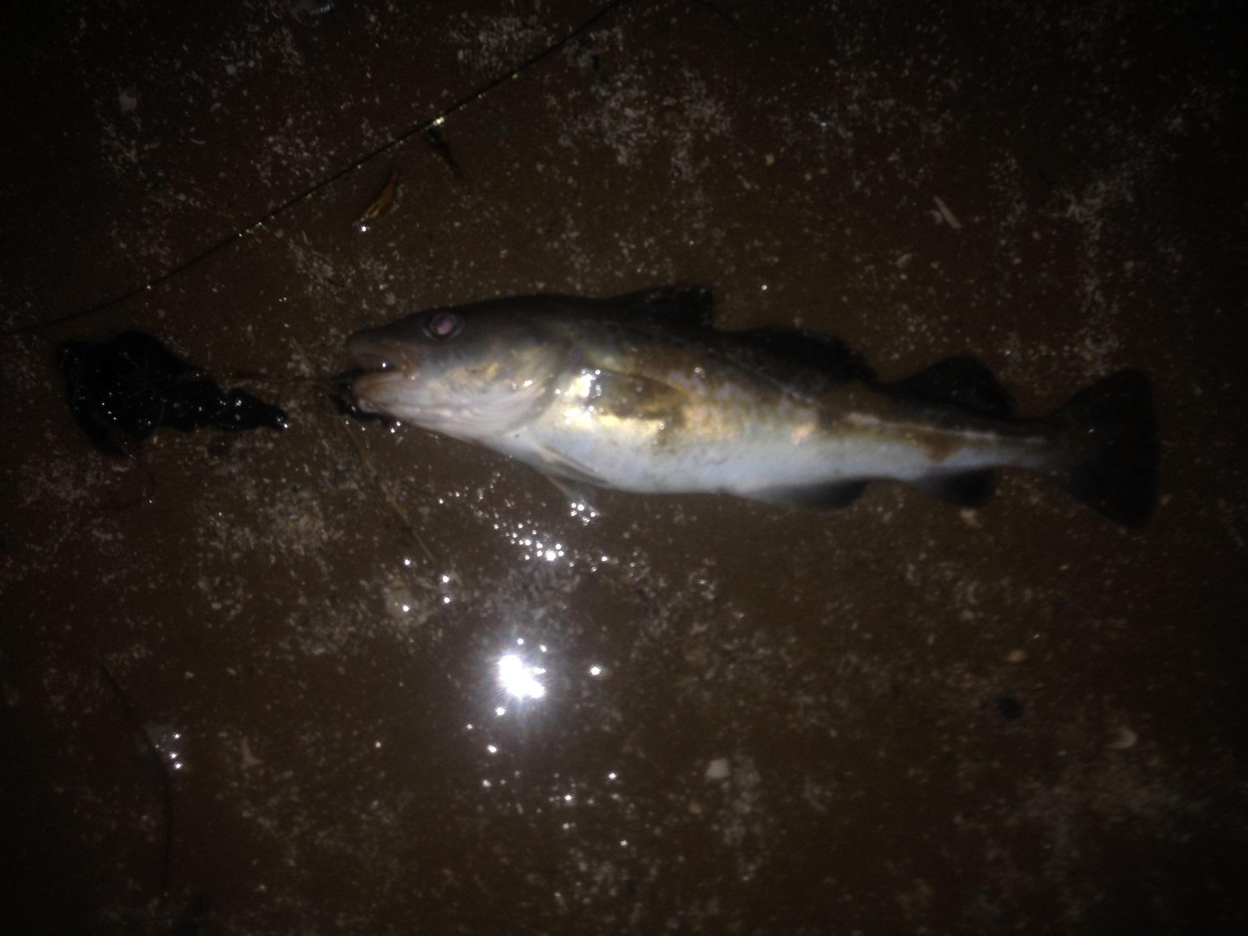 Fishing 4thJan14 with stan (6).JPG