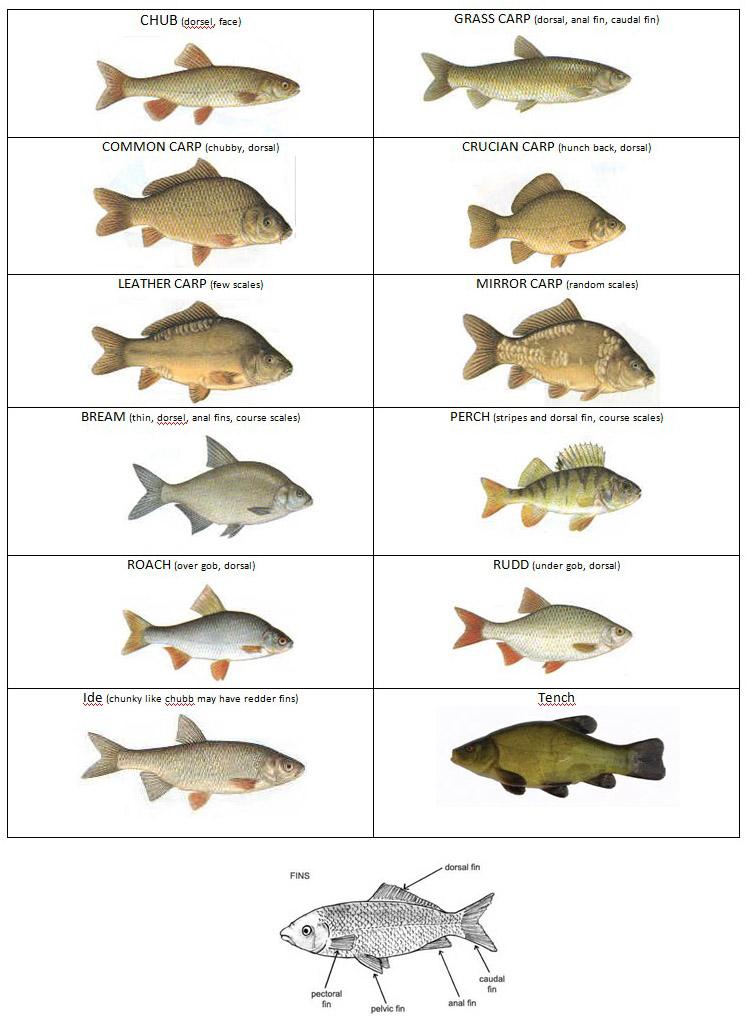FISH TYPES IMAGE.jpg