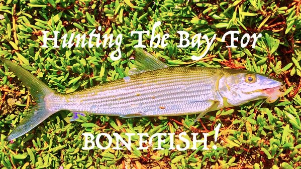 Bay Bonefish.jpg