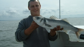Bass in the bay