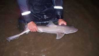 Fylde Coast Smoothhounds