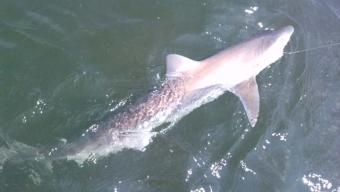 Tope Fishing Prestatyn Northwales