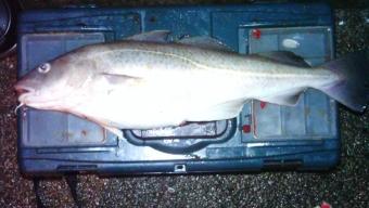 Heysham – Winter Cod fishing